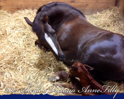 Sarde's Victoria Anne and 2014 Filly by Minion Millennium